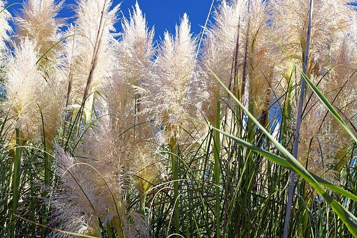 Choulostivé traviny je potřeba zazimovat (Zdroj: Depositphotos)