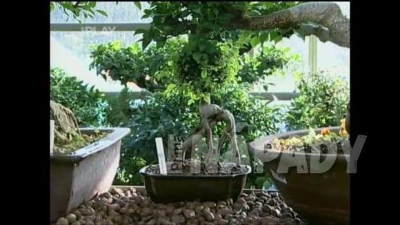 Jak se v zimě starat o bonsaje