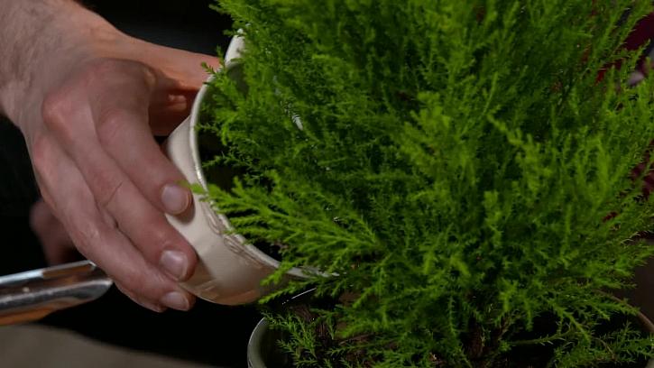Kávová sedlina přihnojí rostliny
