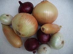 Cibule ze semen nebo ze sazečky?