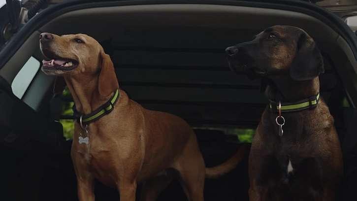 Psi v autě