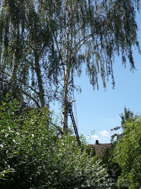 Antikutil - kácení stromů na vlastní nebezpečí