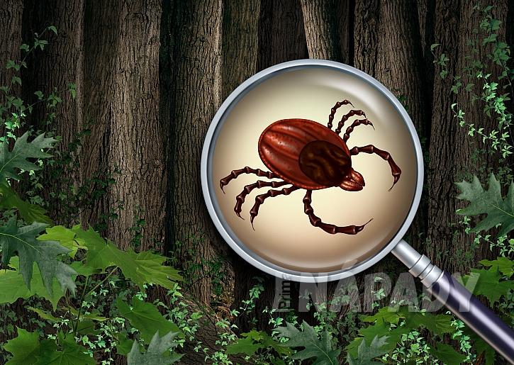 Při návštěvě lesa či na procházce po louce můžete chytnout klíště. Jak se proti klíšťatům chránit? (Zdroj: depositphotos.com)