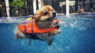 Neumí váš pejsek plavat? Můžete ho to naučit!