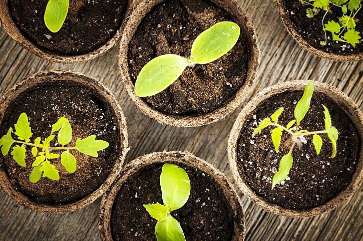Úspěšné předpěstování vlastních rostlin je jednoduché (Zdroj: Depositphotos)