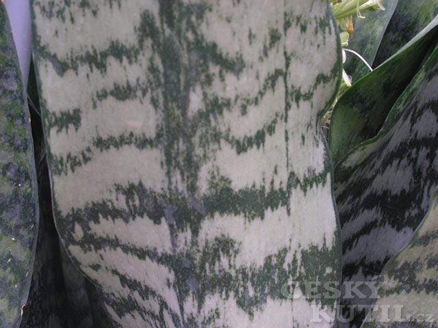 Pokojové rostliny pocházející z tropů