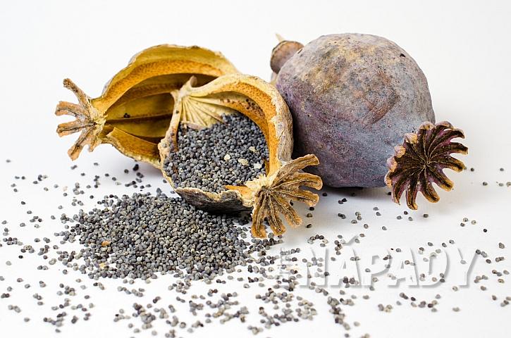 Makovice jsou plodem všech zástupců rodu Papaver