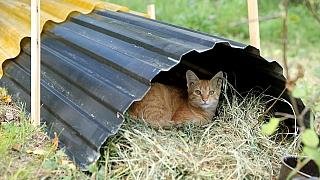 Jak se na zahradě zbavit myší ahrabošů bez chemie