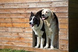 Bouda pro psa – příbytek vašeho psího miláčka