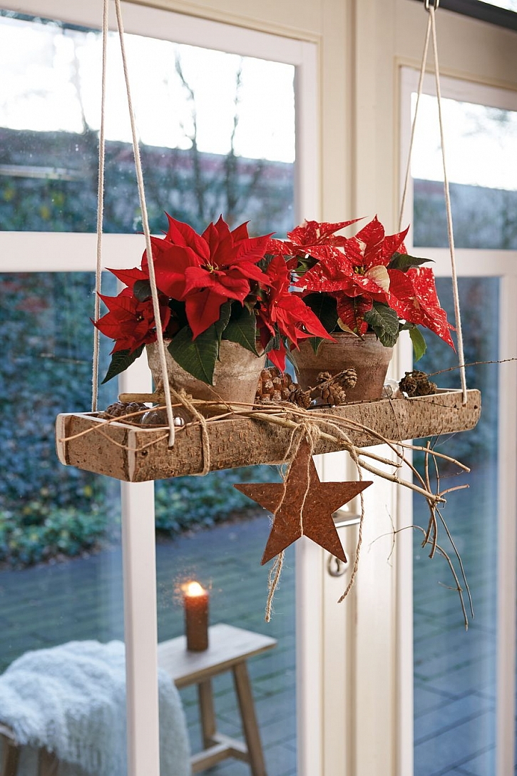 csm_2020_poinsettia_02000_Natural_Christmas_Warmth_07_88702601a5