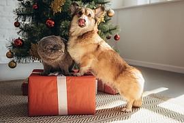 Udělejte Vánoce i svým mazlíčkům, nezapomeňte na ně s dárky