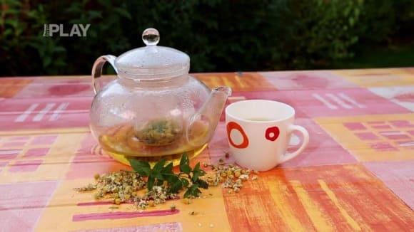 Čaj na podporu zažívání
