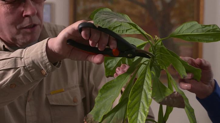 Poškozená rostlina