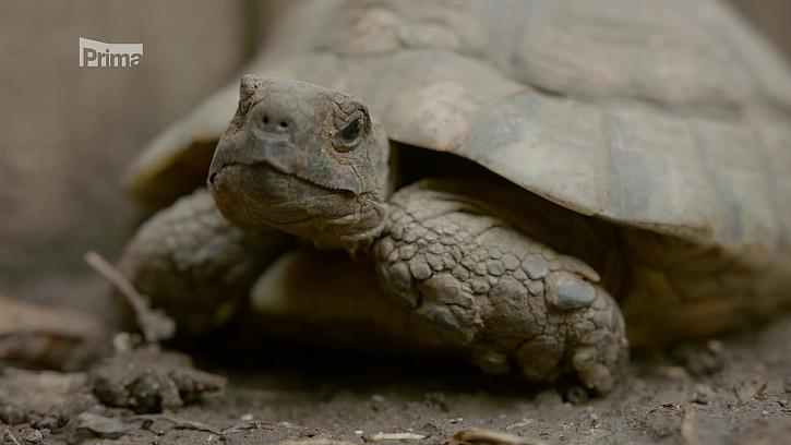 Víte, jak správně zazimovat želvy? (Zdroj: Jak zazimovat želvu)