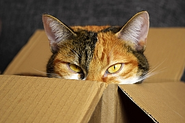 Pelíšek pro kočku: Nepotřebuje luxus, miluje krabice