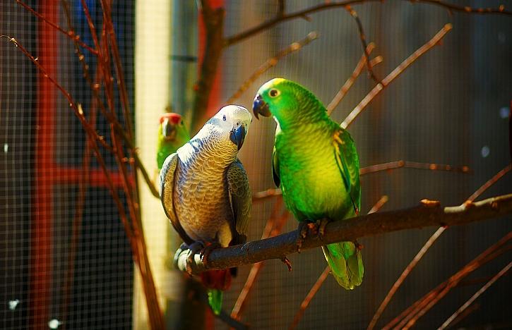 Ptačí voliéra pro chov okrasných ptáků po celý rok venku (Zdroj: Depositphotos)