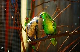 Chov okrasných ptáků po celý rok venku