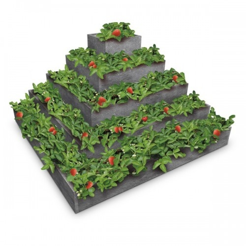 pyramida na jahody