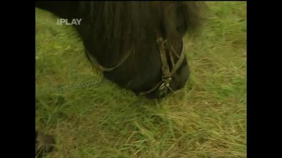 Venčení koně Čendy