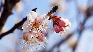 Ovocné stromy hlásí, že je čas je přihnojit