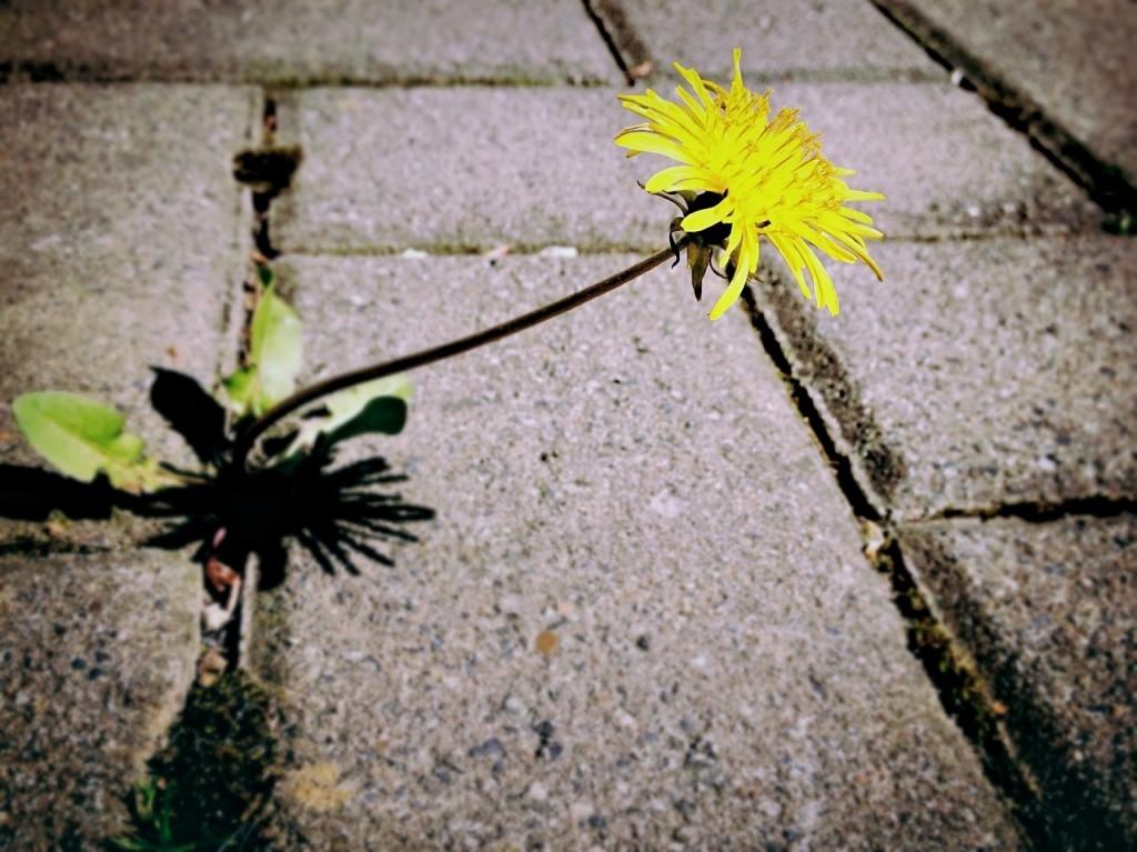 Jak si poradit s hubením plevele a nežádoucí vegetace?