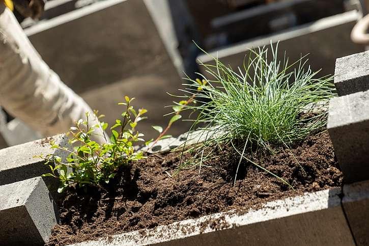 Zasazení rostlin do stěny