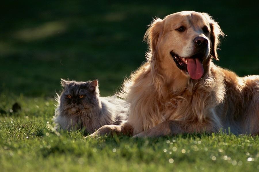10 častých omylů o parazitech u psů a koček
