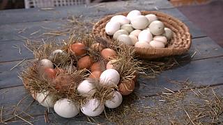 Velikonoční dekorace ze skořápek od vajec