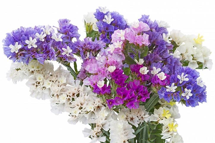 Kytice z několika druhů květin, vhodných k sušení (Zdroj: Depositphotos)