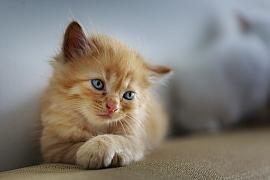 Prevence zdravotních problémů koček: Jak často chodíte se svou kočkou kveterináři?