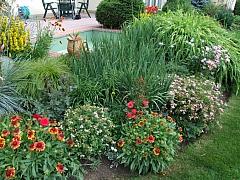 Medonosné rostliny, které jsou užitečné i krásné