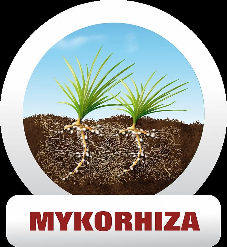 Jak účinkují mykorhizní houby v přípravku a jakou zde hrají roli?