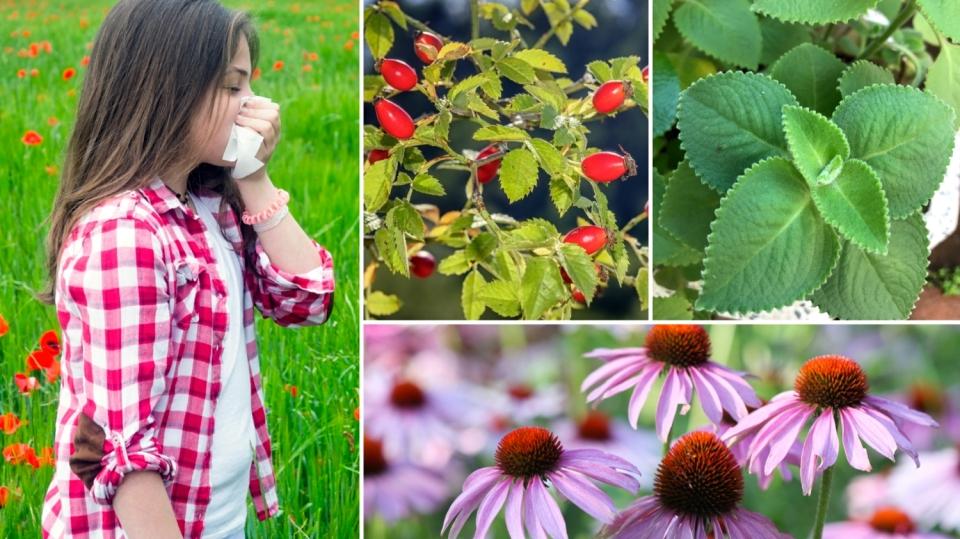 Máte i v parném létě kašel a rýmu? 8 bylin, které si s nachlazením poradí