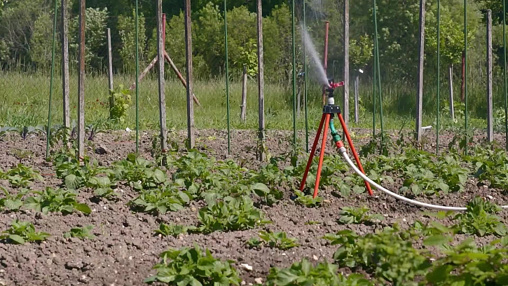 jak pomoci rostlinám s dostatkem závlahy po celou sezonu