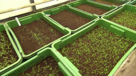 Jarní výsev zeleniny