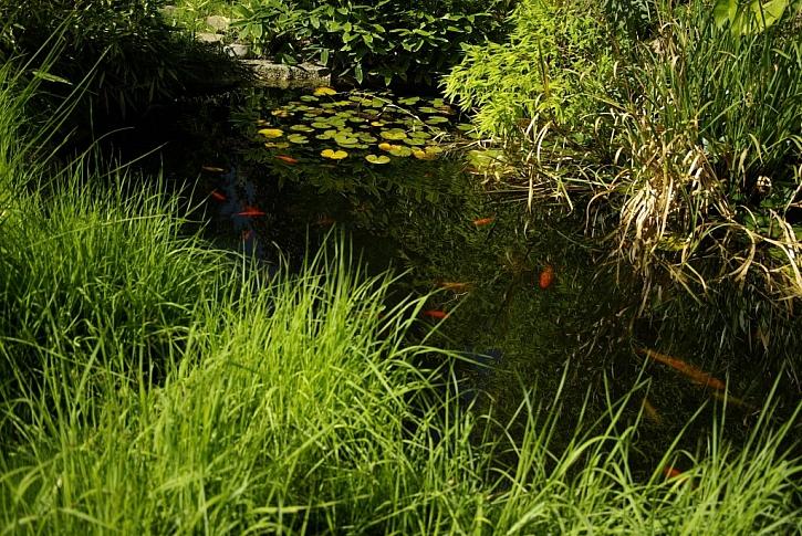 Péče o vodu v zahradním jezírku