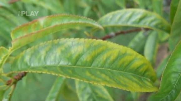 Choroby pokojových rostlin