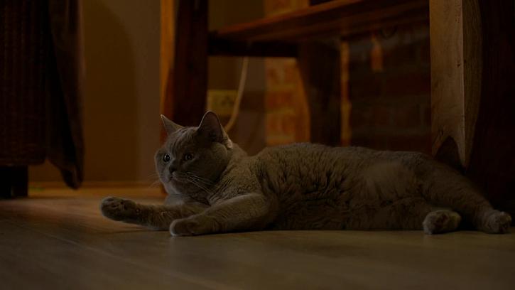 Šedá kočka v domě