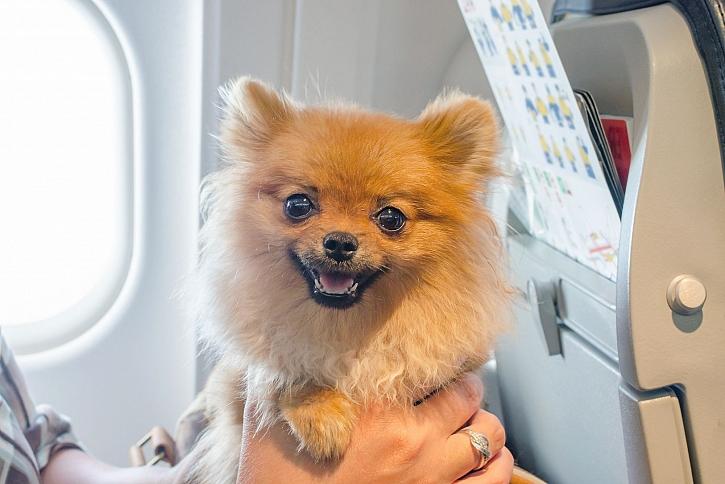 Pes v letadle