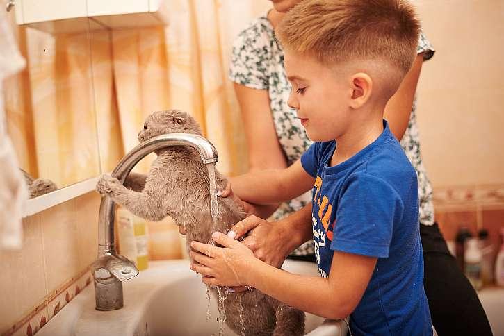 Chlapeček umývá tělo kočky