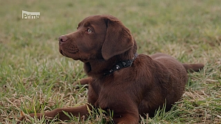 Problémy pohybového aparátu psů
