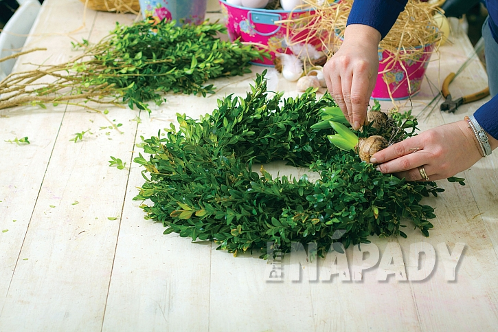 Očistěte a přivažte hyacinty