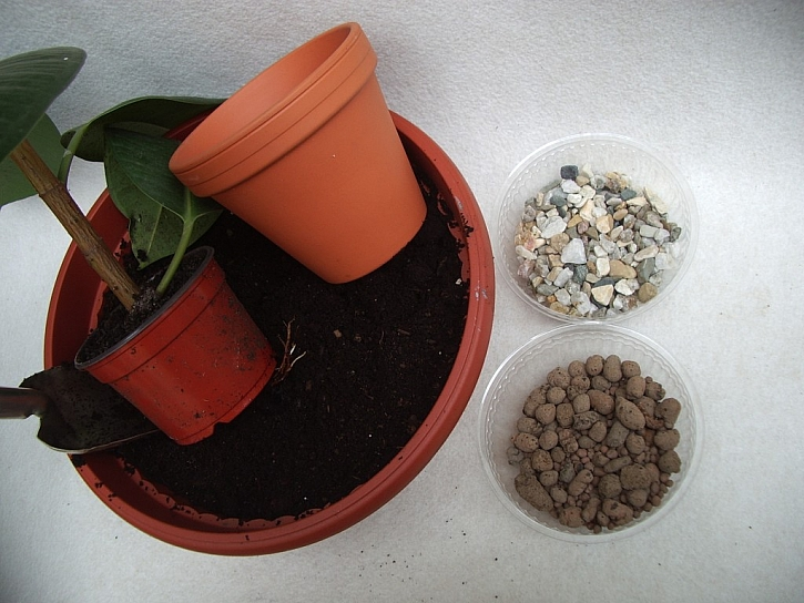 Jak přesadit pokojové rostliny