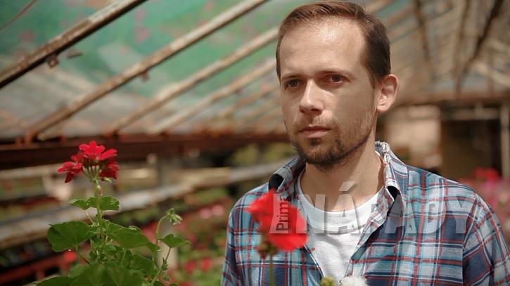 Jak na to, aby pelargonie neboli muškáty bohatě kvetly, radí zahradník Jakub Urner