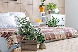 S touto rostlinkou se vám bude doma lépe dýchat, vypěstujte si ji