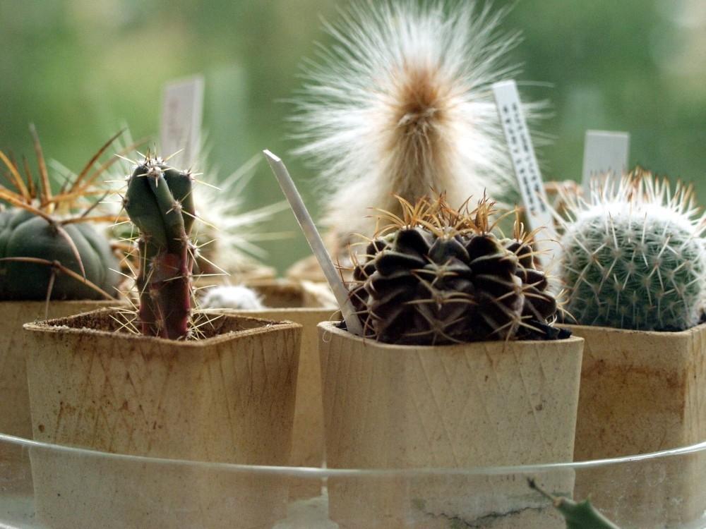 Kaktusy a sukulenty pomáhají relaxovat