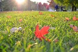 Připravte trávník na zimu: Návod na správnou podzimní vertikutaci