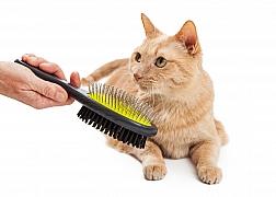 Zbavte se zvířecích chlupů – rychle a účinně