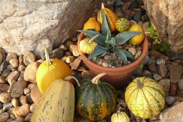 Čas dýňových strašidel je tady – podzimní dekorace