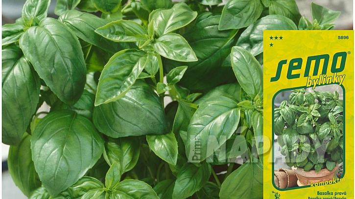 Mini bazalky pro truhlíky a květináče: odrůda POKEMON